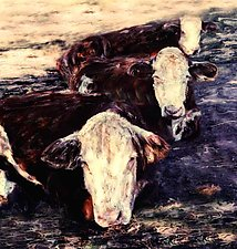 Cows by Julie Betts Testwuide (Color Photograph)