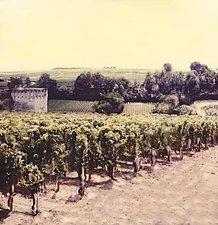 Bordeaux Vineyards by Julie Betts Testwuide (Color Photograph)