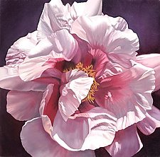 Single Pink Peony by Barbara Buer (Giclee Print)