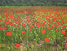 Poppies Provence by Laurie Regan Chase (Giclee Print)