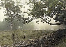 Stone Wall by Vicki Reed (Hand-colored Photograph)
