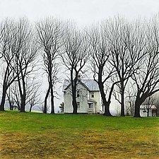 Misty Morning - Spring Trees by Steven Kozar (Giclee Print)