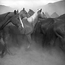 Remuda, Spanish Ranch by Adam Jahiel (Black & White Photograph)