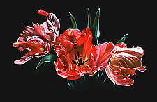 Red Parrot Tulips by Barbara Buer (Giclee Print)