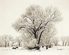 Winter, Bishop California by Joel Anderson (Black & White Photograph)