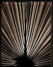 Palmero by Allan Baillie (Black & White Photograph)