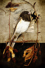 Song of a Junco (New Beginning) by Yuko Ishii (Color Photograph)