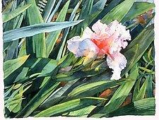 Iris by Marlies Merk Najaka (Giclée Print)
