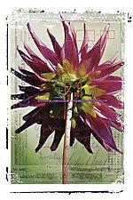 Beauty Card by Kevin Sprague (Giclée Print)
