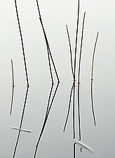 The Reed Section by Adrienne Adam (Black & White Photograph)