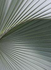 Zen Palm by Adrienne Adam (Color Photograph)