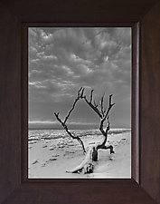 Tree Study by Geoffrey Agrons (Black & White Photograph)