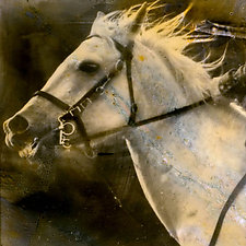 Dragoon 1776 by John Maggiotto (Black & White Photograph)