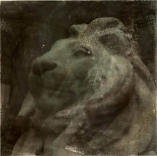 Lion by John Maggiotto (Black & White Photograph)