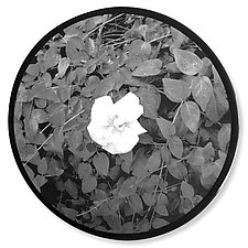 Round Gardenia Wall Panel by Jenny Lynn (Black & White Photograph)