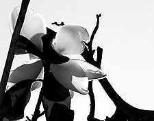 Magnolia - A View From Beneath by Joni Purk (Black & White Photograph)