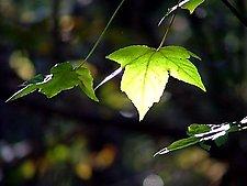 Carolina Autumn by Joni Purk (Color Photograph)