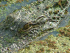 Swamp Security by Joni Purk (Color Photograph)