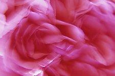 Floral Essence II by Patricia Garbarini (Color Photograph)