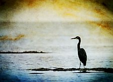 Song of a Great Blue Heron III by Yuko Ishii (Photography Color)