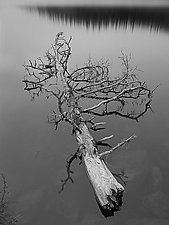Tree On Echo Lake by Joseph Hyde (Black & White Photograph)