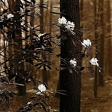 Forest Flowers by Joel Anderson (Black & White Photograph)