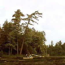 Adirondack Canoe by Julie Betts Testwuide (Giclee Print)