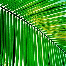 Palm Branch by Julie Betts Testwuide (Giclee Print)
