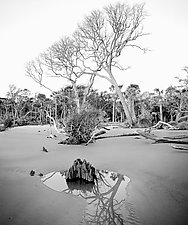 Hunting Island by Paul Shatz (Black & White Photograph)