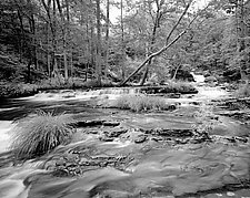 Otter Creek by Paul Shatz (Black & White Photograph)