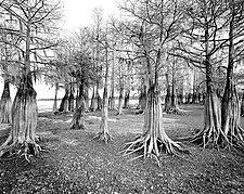Lake Marion by Paul Shatz (Black & White Photograph)