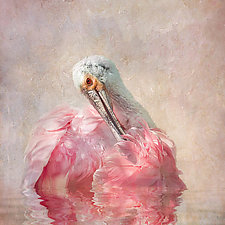Rhapsody in Pink by Melinda Moore (Color Photograph)
