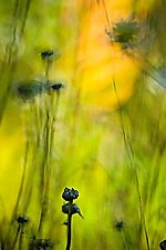 Weeds 132 by Tim Forcade (Color Photograph)