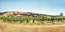 Hills of Sonoma Wine Country by Matt Anderson (Color Photograph)