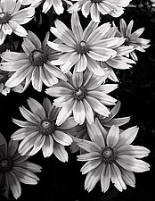 Monochromatic Flowers No.1 by Mike Cable (Black & White Photograph)