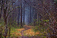 Van Dyke Woods 20 x 30 by Richard Speedy (Color Photograph)