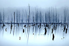 Trees In Foggy Blue by Richard Speedy (Color Photograph)