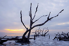 Morning Tide - Edisto Island 28 x 42 by Richard Speedy (Color Photograph)