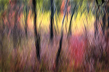 The Painted Forest 20 x 30 by Richard Speedy (Color Photograph)