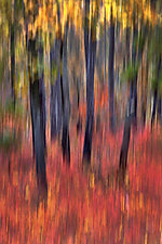 Fall of Grace 20 x 30 by Richard Speedy (Color Photograph)