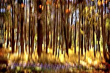 Fall Passage 28 x 42 by Richard Speedy (Color Photograph)