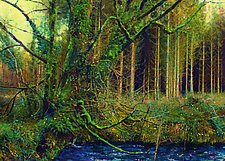 Deep Roots, Hidden Water by Ron Reams (Giclee Print)