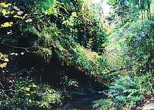 Nature's Path by Ron Reams (Giclee Print)