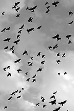 Flight by Adam Jahiel (Black & White Photograph)