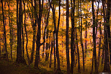 Chapel Forest in Fall by Matt Anderson (Color Photograph)
