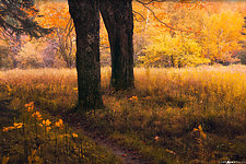 Sable Meadows in Fall by Matt Anderson (Color Photograph)