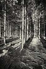 Irish Wood by Geoffrey Agrons (Black & White Photograph)