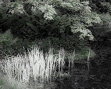 Maple Garden Pond number 1 by Steven Keller (Black & White Photograph)