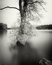 Surfactant by Geoffrey Agrons (Black & White Photograph)