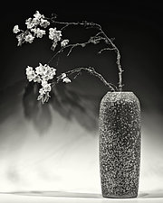Still Life with Apple Blossoms by Geoffrey Agrons (Black & White Photograph)